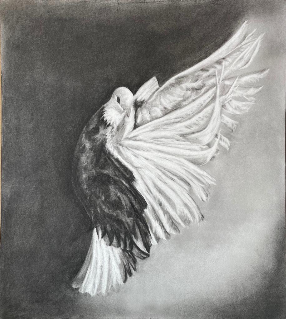 Black dove for printing