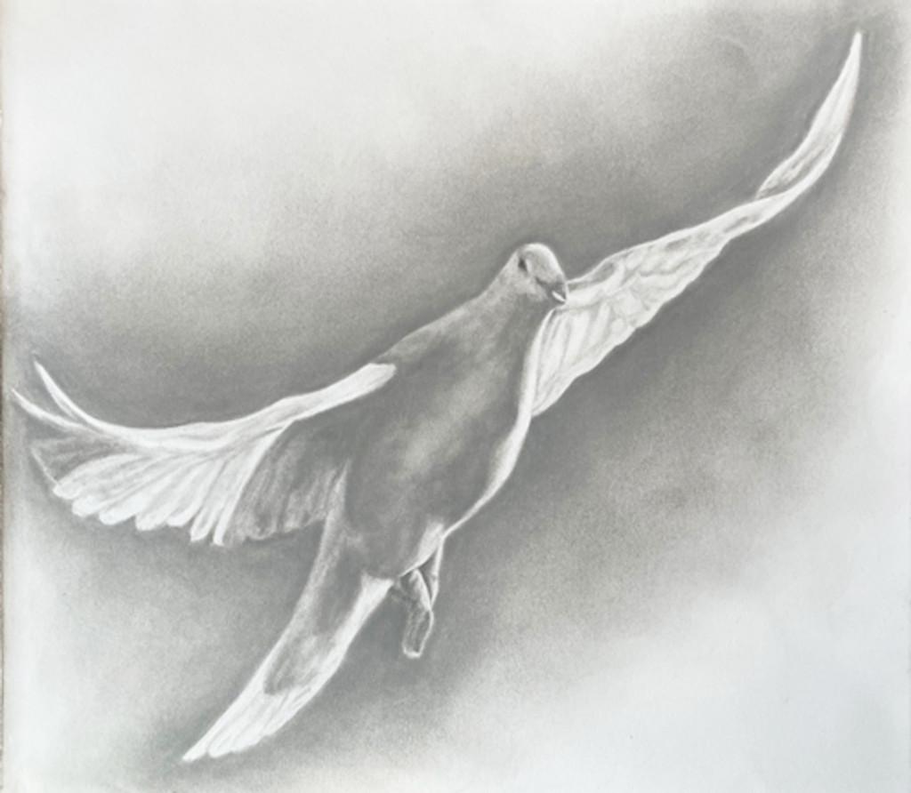 Grey dove for printing2